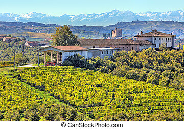 Vineyards on the hills in Piedmont, Italy. - View of...