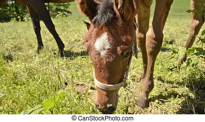 close up of grazing warmblood horse foal portrait Together...