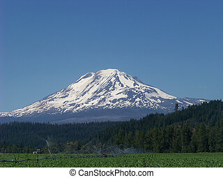 Mt Adams and an irrigated field at Glenwood, Washington