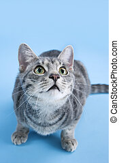 Adorable gray striped cat crouching - High angle view of...