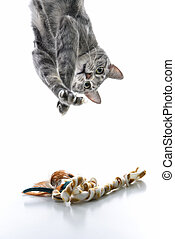 Gray cat playing upside down - Gray striped cat hanging...
