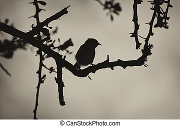 Sepia Smill Bird in Thorn Tree Silhouette - Sepia Black and...