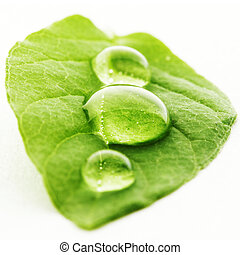 Water drop on leaf macro - Water drop on leaf isolated on...