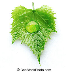 Water drop on leaf macro