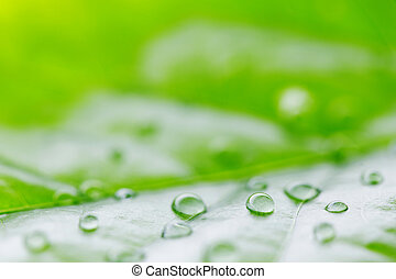 Water drop on green leaf macro
