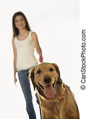 Dog on leash with girl. - Golden Retriever dog on leash with...