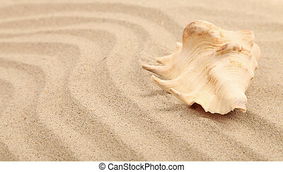 One shell is located on sandy background
