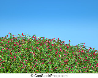 Cranberry thicket and blue sky Healthy lifestyle