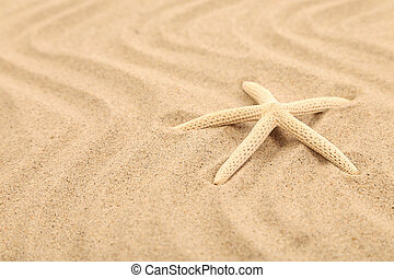 One starfish is located on sandy background