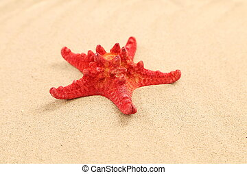One red starfish is located on sandy background