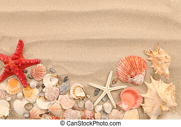 Lot of shells and seastars on sandy background