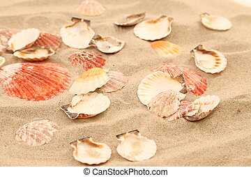 Lot of shells is located on sandy background