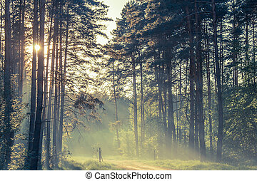 Evening forest with sun and volume light