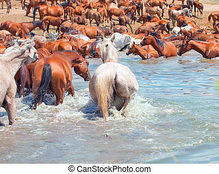watering place of arabian herd sunny day