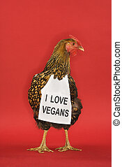 Chicken wearing funny vegan sign - Golden Laced Wyandotte...