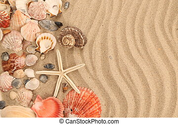 Background of sand, shells and sea start