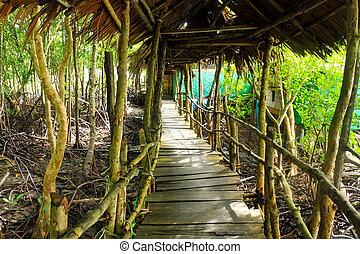 Wood bridge go to mangrove forest