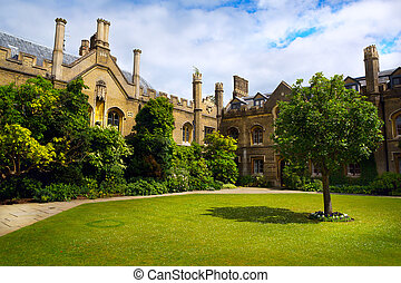Art Cambridge University College