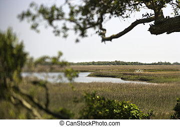 Wetland marsh coastal landscape. - Marsh landscape on Bald...