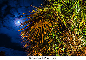 palm tree at night near hotel - night scenes at the florida...