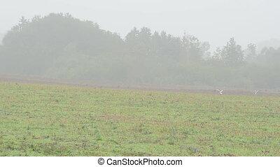 plow field stork fog