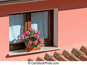 flowers and sill - flower pot on a window sill,