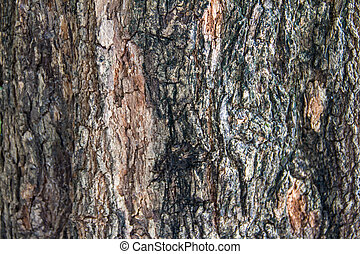 Bark of tropical tree in the northeast of Thailand