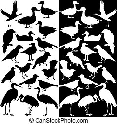 Birds silhouettes (Black and White)