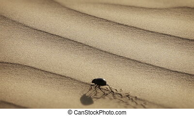 Scarab is making a mark in the sand - Video 1920x1080 -...