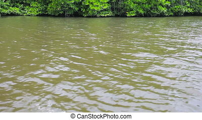 Tropical river with mangroves - Video 1920x1080 - Tropical...