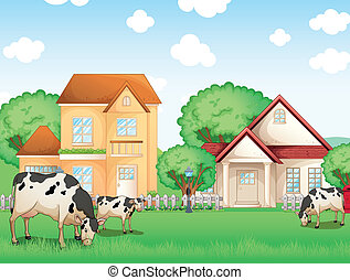 Three cows eating in front of the neighborhood