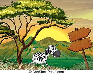 A zebra running following the wooden arrowboards