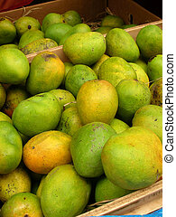 Mangoes - Closeup of different variety of mangoes of India.