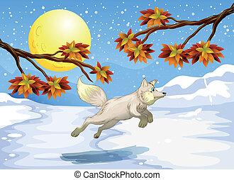 A fox jumping