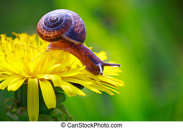 Snail - snail crawling on a flower