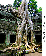 Ta Prohm, Cambodia - Ta Prohm's temple in cambodia without...
