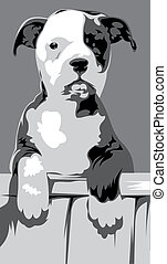 aggressive dog - illustrated aggressive dog on the gray...