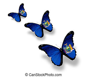 Three New York flag butterflies, isolated on white