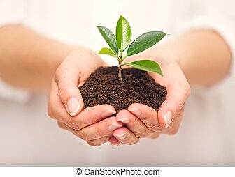 Handful of Soil with Young Plant Growing - Womans hands with...