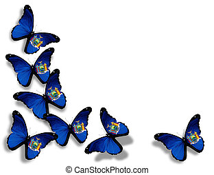 New York  flag butterflies, isolated on white background