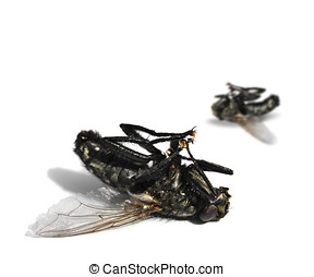 Dead flies on white background - Two dead flies on white...