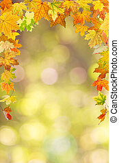 Autumn foliage - Maple autumn foliage, on natural background...