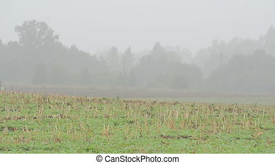tractor plow field fog - tractor plow field in autumn early...