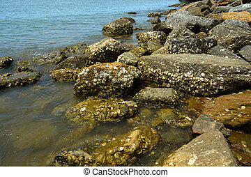 Many oyster shells embedded with the rock