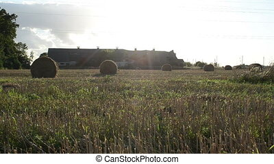 straw roll farm building - straw bales rolls in agricultural...