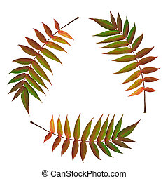 Fern Leaf Symbol - Three fern leaves in the colors of fall...