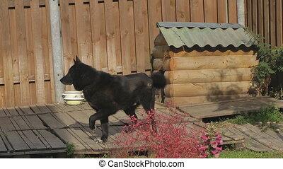 Watchdog.