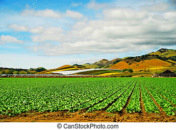 Strawberry Fields Forever - On the Central coast of...