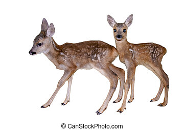 Fawns isolated - roe, deer, capreolus, fawn, fawns, babies,...