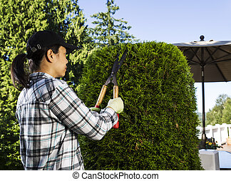 Mature woman Trimming the Hedges near her patio - Photo of...